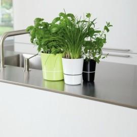 Hydro herbs : pot pour plantes aromatiques